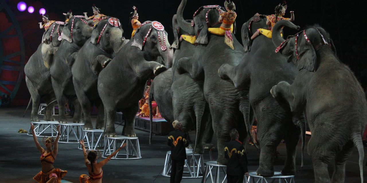 Victory! Italy Bans Animals in the Circus