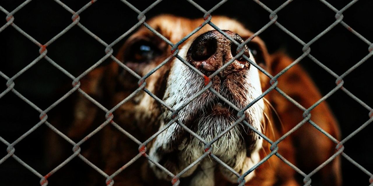 Spanish Court Jails Ex-President of Animal Shelter for Needlessly Killing Healthy Animals