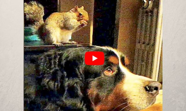 VIDEO: Rescued Squirrel Now Has the Best Dog 'Brother'