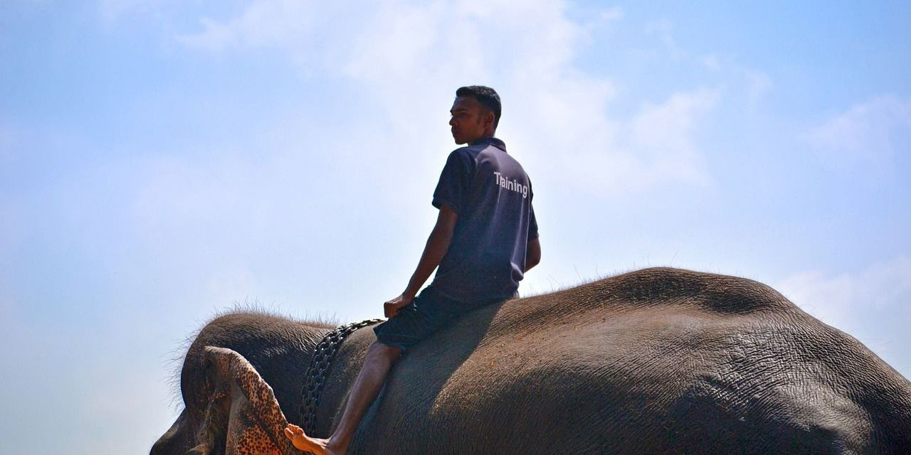 Undercover Video Shows Elephant Beaten Until His Leg Breaks in Cruel Tourism 'Training'