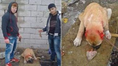 Men in Turkey who tortured a dog, punished by a fine.