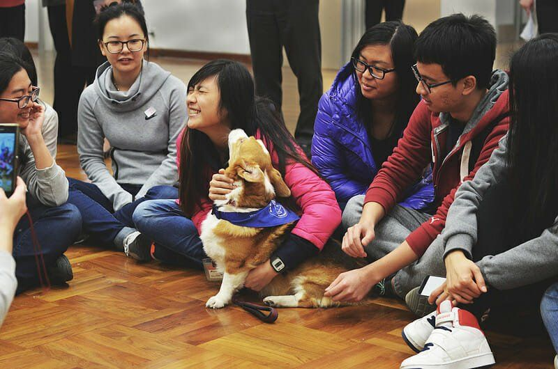 Chinese High Schools Will Finally Teach Animal Welfare