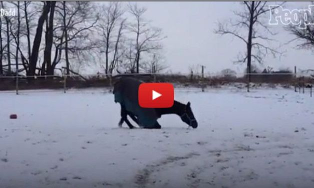 VIDEO: Rescued Horse Sees Snow for First Time Ever, Acts Just Like Puppy