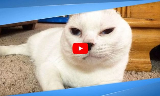 VIDEO: How an Earless Cat Helped One Woman Overcome Her Anxiety