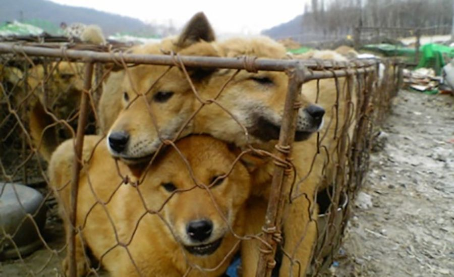 Sign: Pass New Bill to Ban Horrific Dog Meat Farms in S. Korea