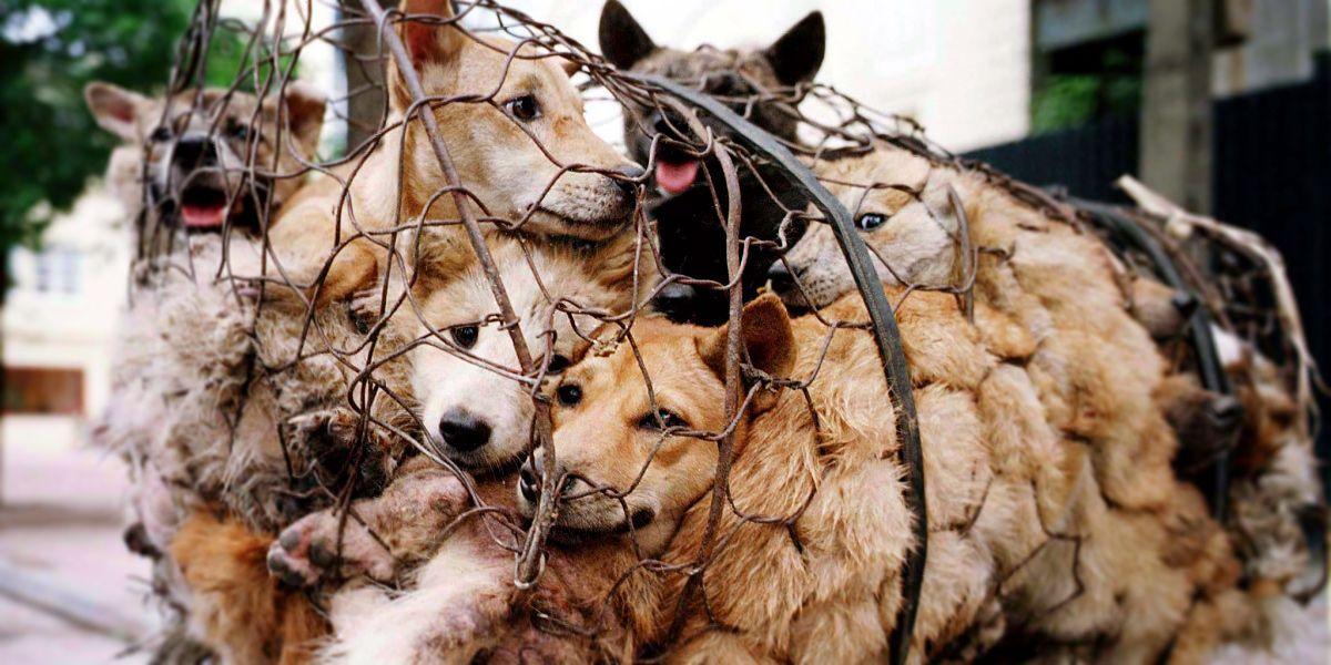 China's Online Retailers are Dropping Dog Meat from their Stores