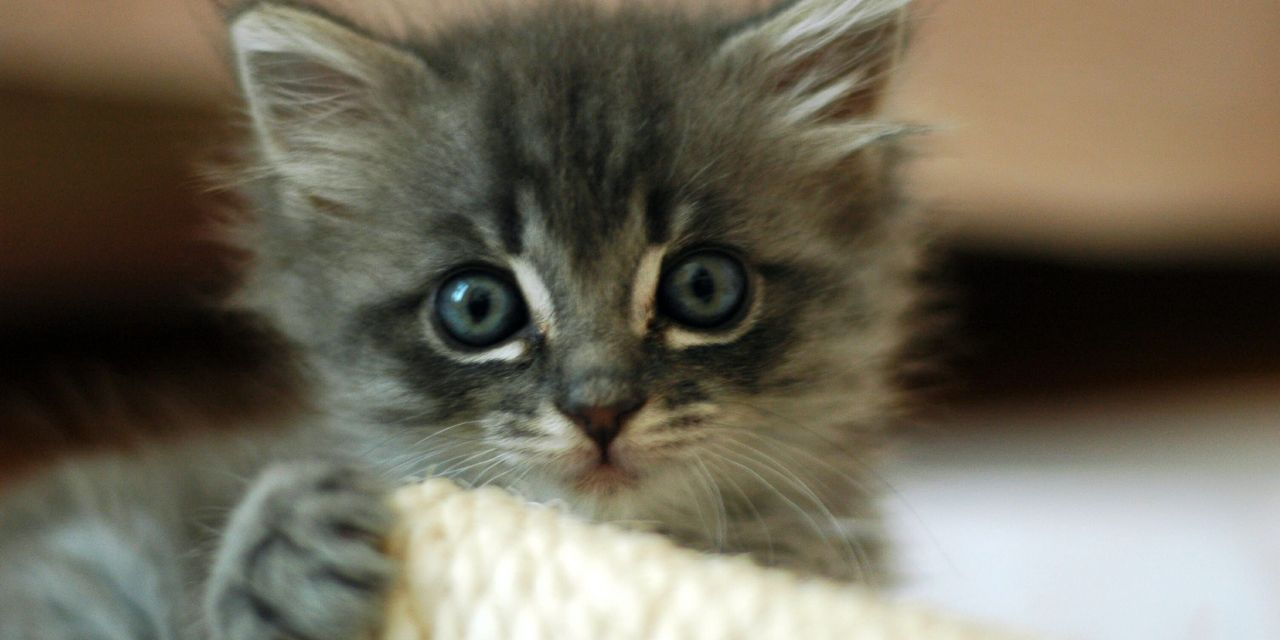 Vets Called on to 'Fix' Cat Overpopulation in the May Spay Challenge