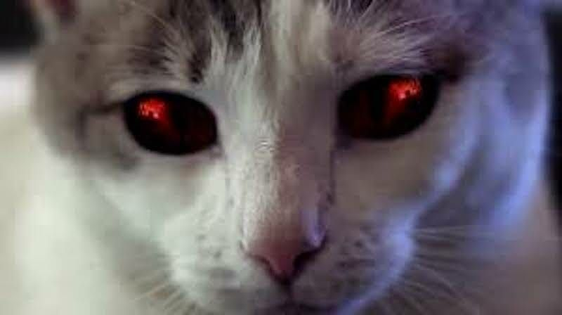'Hell's Kitty' Movie to Premiere at Chinese Theater in Hollywood to Benefit Cats