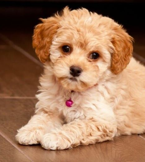 This Florida County Has Just Banned Sale of Pets from Puppy