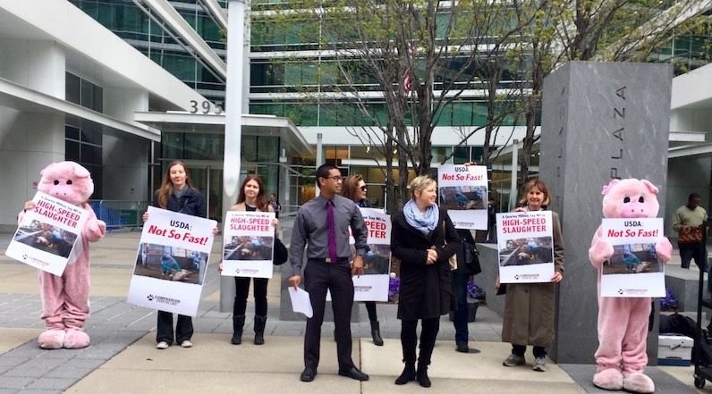 Activists Deliver 250,000 Petition Signatures to USDA to Stop High-Speed Pig Slaughter