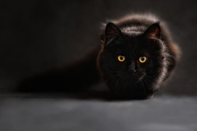 Black Cats Are Being Shunned Because they Don't Look Good in Selfies
