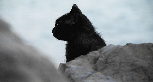 black cat silhouette photography