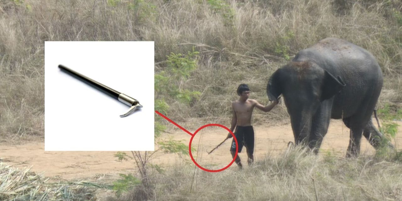Sponsors Are Dropping Out of Cruel Elephant Polo Tournament
