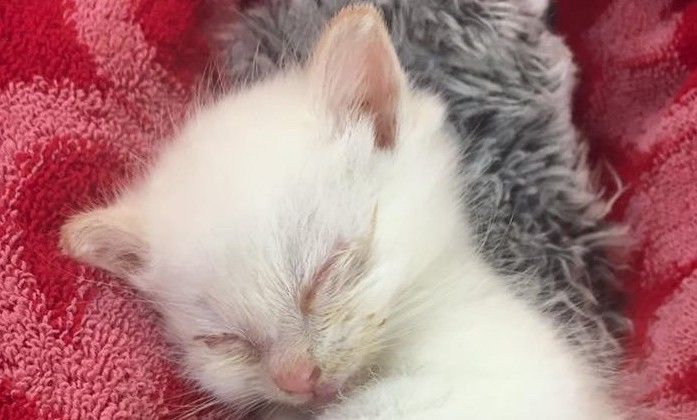 Sick Kitten Thrown from Car Window Finds a Loving Home, Stars in a Storybook