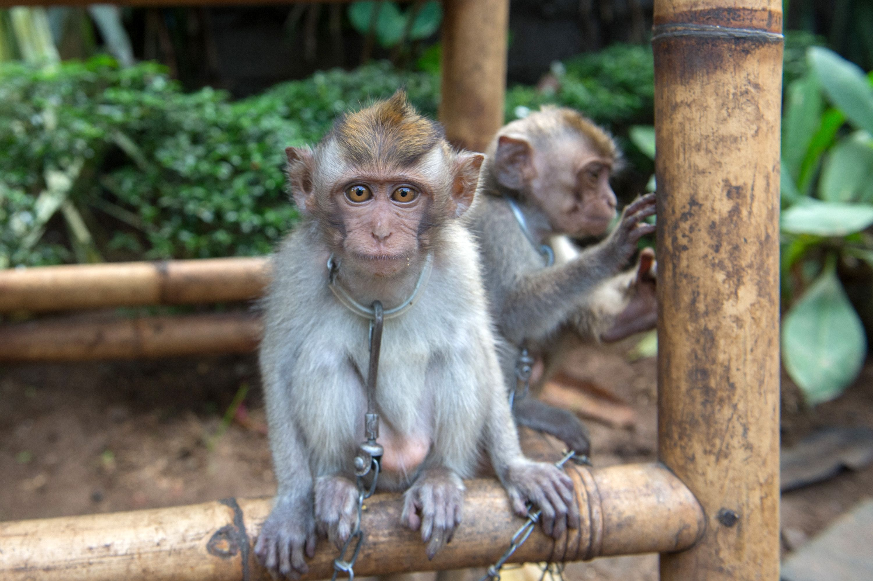 Report: Bali's Tourism Industry is Torturing Animals