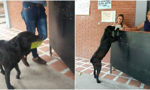 This Dog Brings a Leaf to the Store Every Day to 'Buy' Himself Cookies
