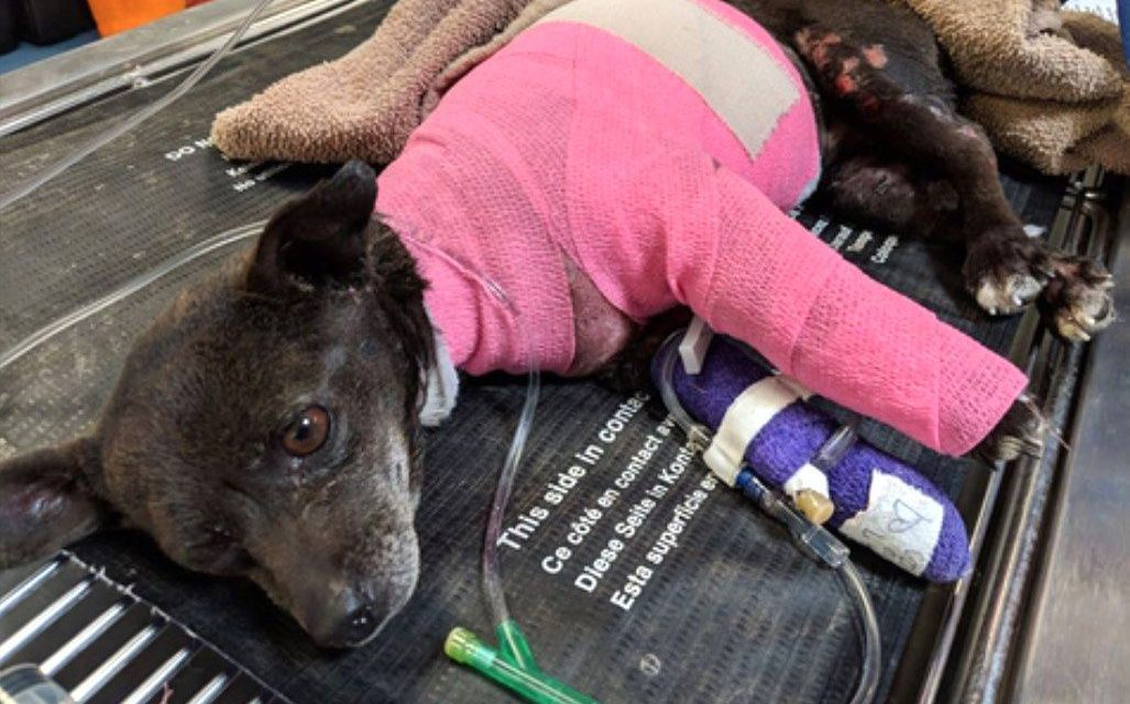SIGN: Justice for Dog Doused in Gasoline and Set on Fire
