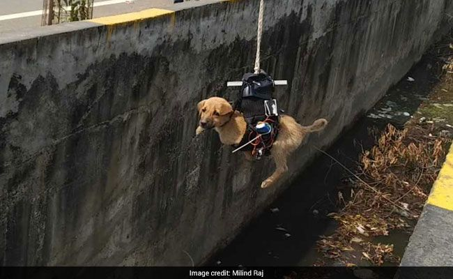 Man Builds Drone to Rescue Dog Trapped in Drain for 2 Days