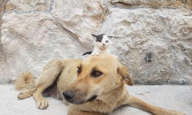 Stray Dog 'Adopts' Homeless Kitten in War-Torn Aleppo