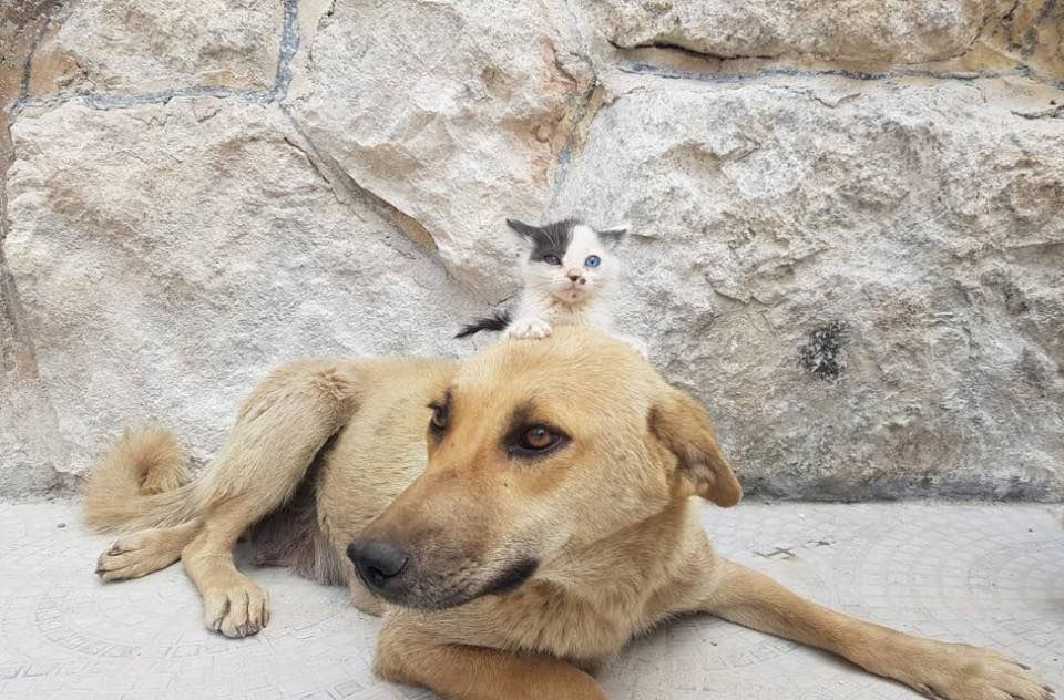 Stray Dog 'Adopts' Homeless Kitten in War-Torn Aleppo