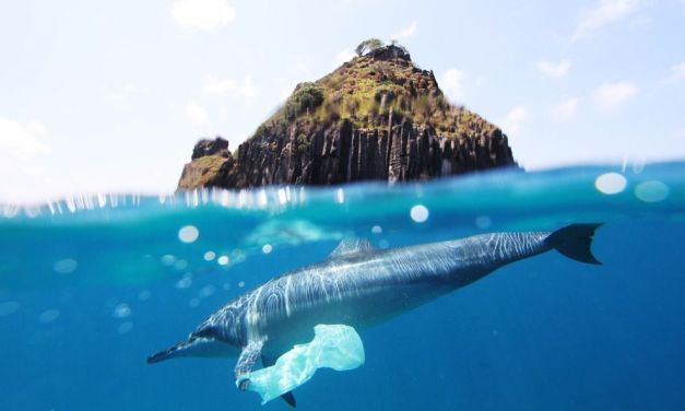 REVEALED: How Much Waste Will Be in Our Oceans in 10 Years Time