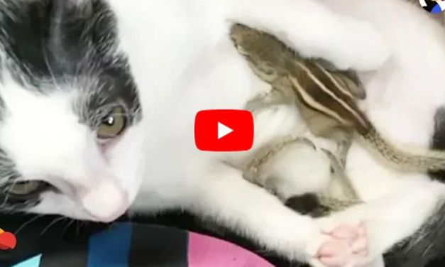 Cat 'Adopts' Baby Squirrels Separated from Mom in a Cyclone