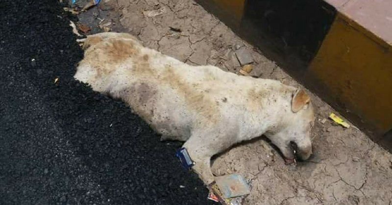 SIGN: Justice for Dog Paved Over with Burning Hot Tar