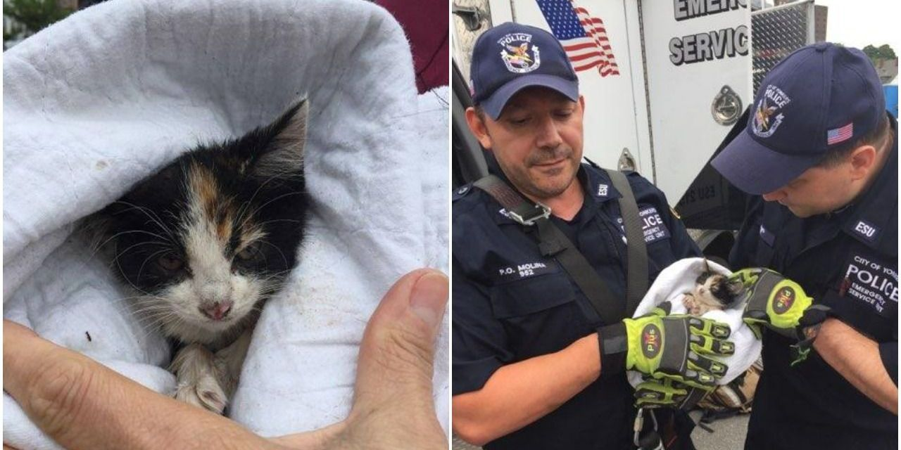 Hero Cops Save Kitten from New York Sewer