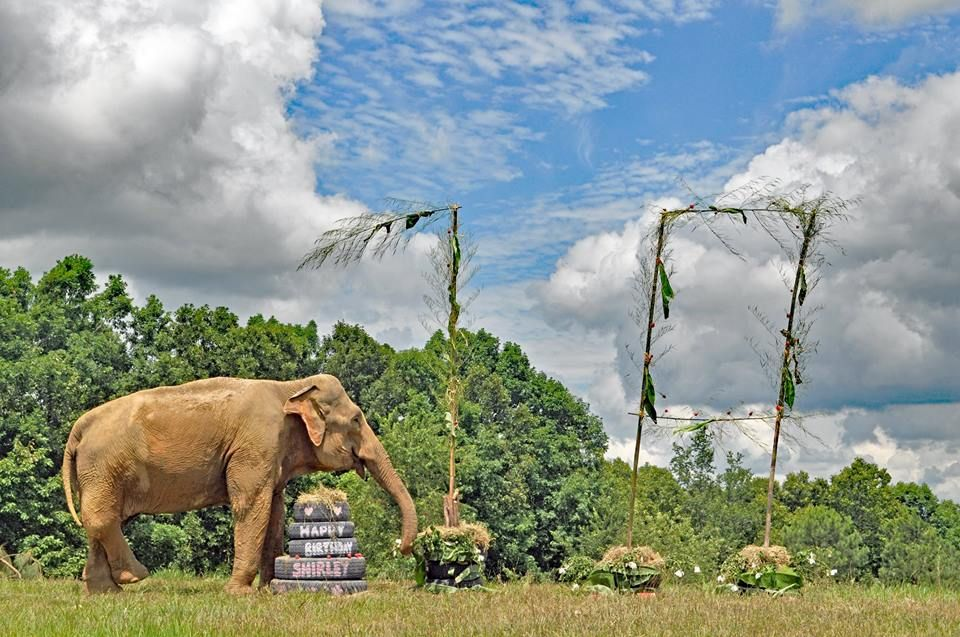 Rescued Circus Elephant Celebrates Her 70th Birthday