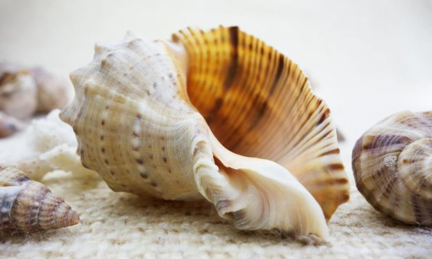 Did You Know Animals Were Tortured to Make Your Sea Shell Trinkets?