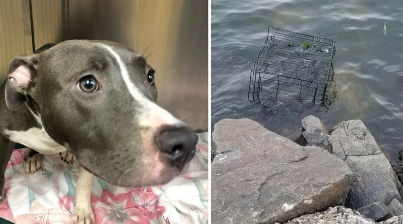 SIGN: Justice for Dog Sadistically Trapped in Cage to Drown