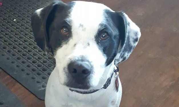 SIGN: Justice for Diesel, Dog Shot Dead by Neighbor for 'Peeing on Trees'