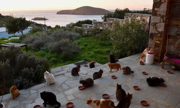'Dream Job' Caring for Cats on Greek Island Paradise is Flooded with Applicants