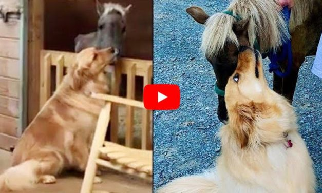 VIDEO: Golden Retriever Helps Once-Starved Rescue Pony Learn to Trust Again