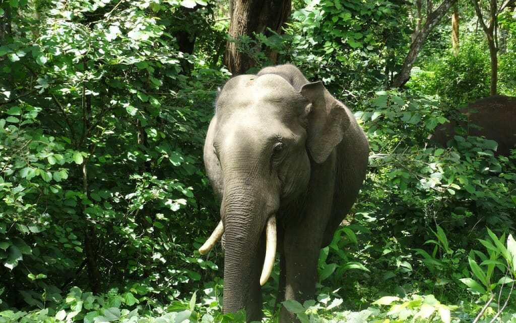 The Battle To Free India's Riding Elephants