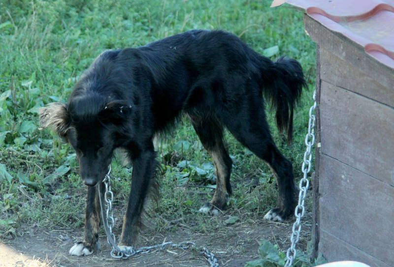 SIGN: Justice for Dog Left to Starve on Chain for Revenge