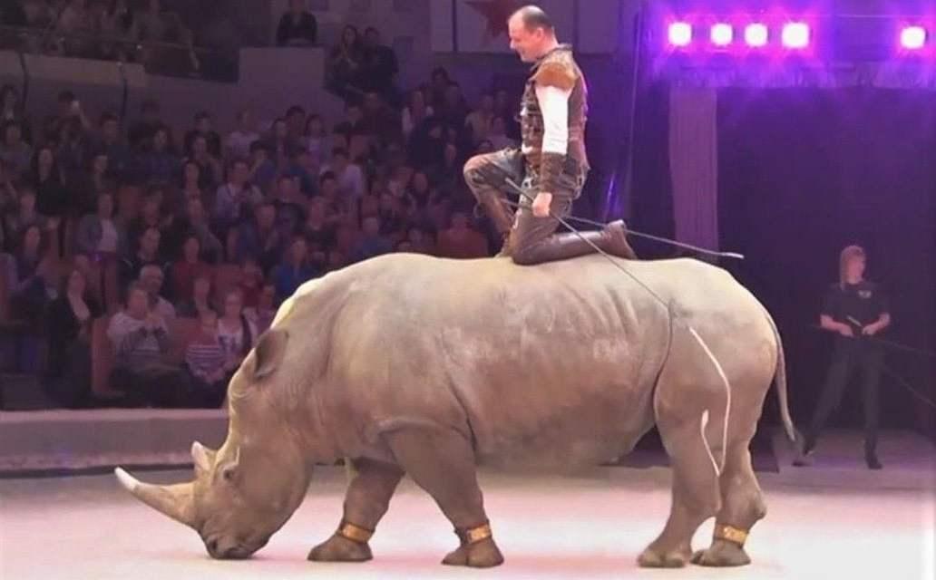 SIGN: Free Mafa the Endangered White Rhino from Circus Cruelty