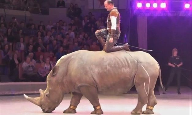 SIGN: Free Mafa the Endangered White Rhino from Circus Cruelty