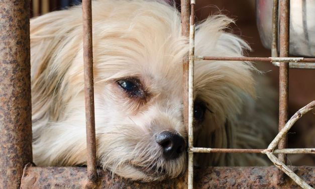 SIGN: Ban Slaughter of Dogs and Cats for Meat in the UK