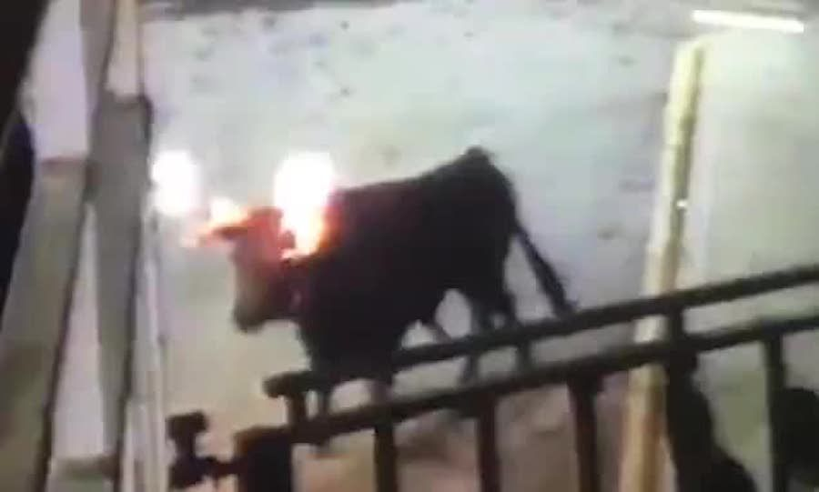 SIGN: End Barbaric Festival Where Bulls' Horns Are Set On Fire
