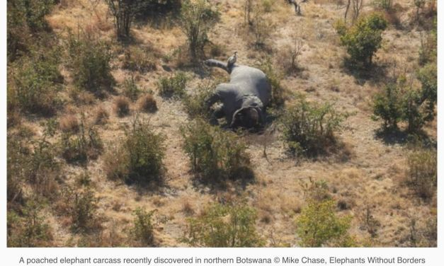 Nearly 90 Poached Elephant Carcasses Found in Botswana