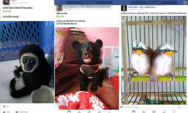 Illegal Wildlife Trade Thriving on Facebook