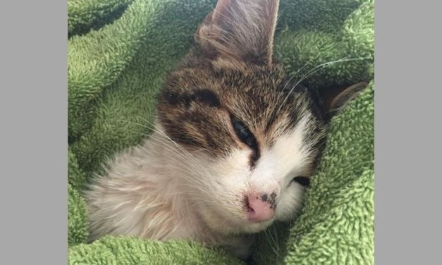 SIGN: Justice for Billy, Kitten with Testicles Savagely Cut Off with Scissors