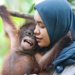 Video: Baby Orangutans Playing In Nursery School – So Sweet!