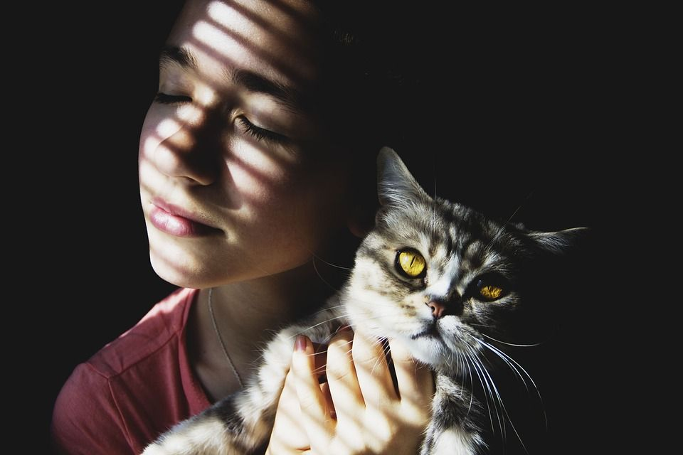 New Program Cares for Cats While Owners Escape Domestic Violence