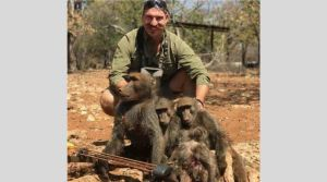 trophy hunted family of baboons