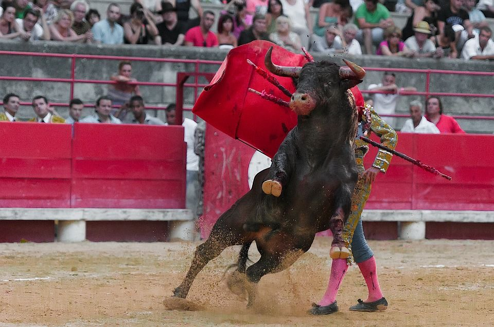 16 People, Including 4 Children, Injured at Spanish Bullfighting Festival
