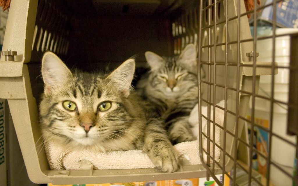 100 Cats Airlifted to Safety from Florida Hurricane