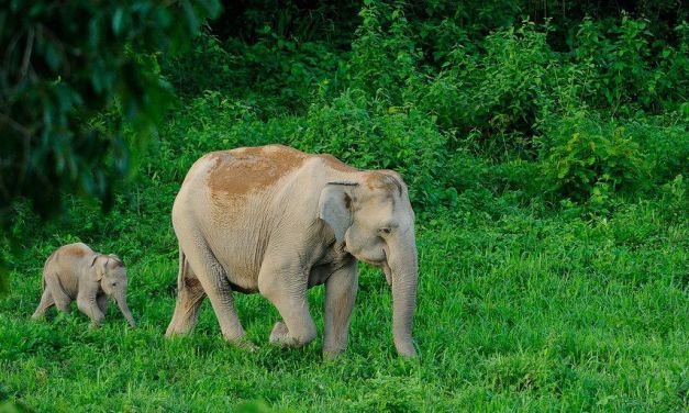 This New Device Could Save Thousands of Elephants from being Hit by Trains in India