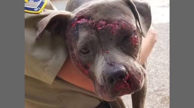 SIGN: Justice for Dog Bound with Duct Tape and Thrown Onto Interstate